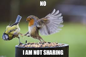 Sharing Meme - not sharing flying kick bird memes imgflip