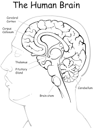 Brain Coloring Page Coloring Pages Brain Coloring Page