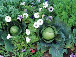 contemporary best garden vegetables to grow or other landscape