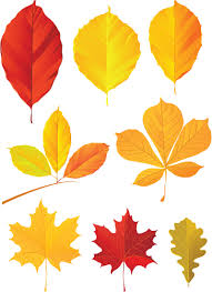 fall leaves autumn leaf shapes variety of colors leaves and