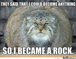 Cute Kittens Memes - fat cat meme funny fat cat pictures with quotes