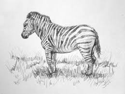 zebra pointillism drawing mike oliver pointallism drawings