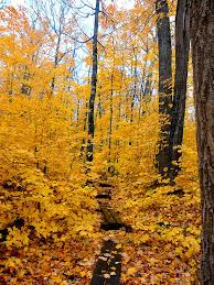 fall color photo essay porcupine mountains michigan