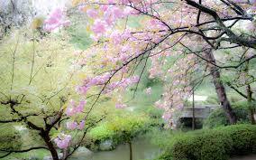 Japanese Garden Cherry Blossom Paintings Interior Design
