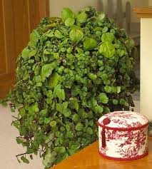 Plants That Survive With No Light 20 Super Easy Houseplants You U0027ll Love Midwest Living
