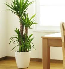 best low light indoor trees indoor plants low light indoor plants best position and best low