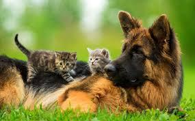 imagenes de animales y cosas en españa aprueban ley para considerar a los animales seres vivos y