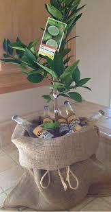 lime tree and coronas u2026 pinteres u2026