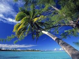 island beach palm tree wallpaper