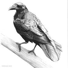 30 beautiful bird drawings art works inspiration