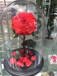 rose in glass rose in glass dome preserved roses in glass from yunnan buy rose