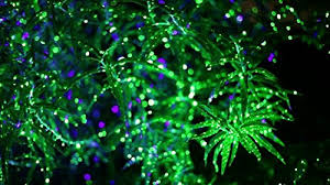 laser lights starry laser lights green moving laser projector projects
