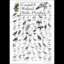 Florida birds images Coastal wetland birds of florida poster earth sky water png