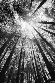 best 25 black and white landscape ideas on black and