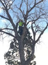 tree removal colorado premier tree care llc