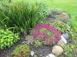 Rock Garden Plants Uk Rock Garden Plants Top Best Plants For A Rock Garden Best Rock