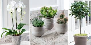 stylish potted plants from the house beautiful collection at