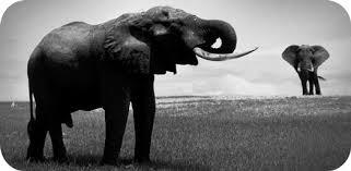 elephant ideas