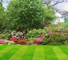 78 best landscape ideas and plants i like images on pinterest