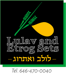 etrog for sale lulav and etrog sets buy on sale for sukkot