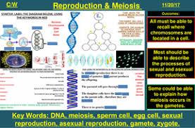 sexual u0026 asexual reproduction dna u0026 meiosis b2 aqa new spec 9 1