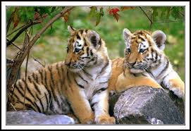 Wild india tours package india wild life tours in india