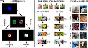 inferential learning of serial order of perceptual categories by