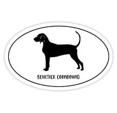 bluetick coonhound decals 34 best bluetick coonhound art and gifts images on pinterest