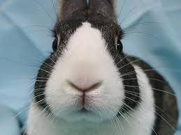 hopping bunny nyc animal shelters are seeing an increase in rabbits ny daily news