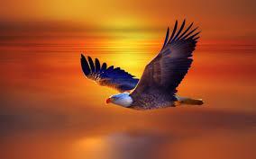 high def desktop backgrounds eagle flying widescreen high definition desktop wallpaper