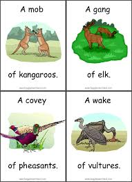 animal collective noun flashcards