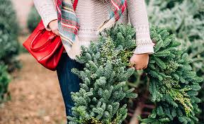 buy christmas tree to buy your christmas tree in hong kong