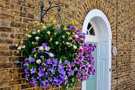 hanging flowers 10 best flowers to use in hanging baskets