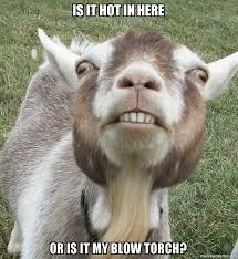 Billy Goat Meme - is it hot in here or is it my blow torch billy goat make a meme