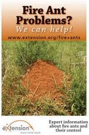 77 best fire ants images on pinterest fire ants fire ant