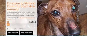 Dogs For The Blind Adoption Community Animal Rescue U0026 Adoption Cara Home Facebook