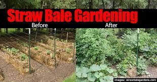 straw bale gardening pictures best idea garden