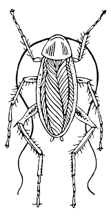 file cockroach psf svg wikimedia commons