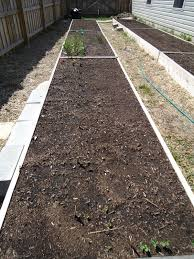 thyme to garden now april 2011