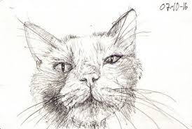 avalon cat cartoons