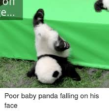 Meme Phone Falling On Face - on poor baby panda falling on his face baby it s cold outside
