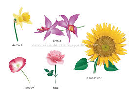 plants gardening plants flower examples of flowers 2
