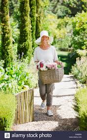 senior woman carrying basket of flowers in garden stock photo