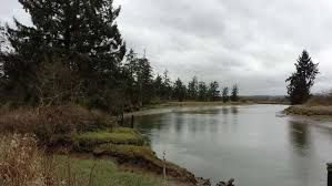 Wetland Resources Of Washington State by Ecoconnect 500 Acres Of Our Wetlands Conserved This World