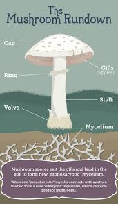 Growing Your Own Vegetable Garden by Best 25 Growing Mushrooms At Home Ideas On Pinterest Growing
