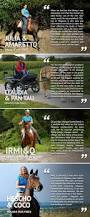 megasus horserunners for horses and horse lovers by megasus