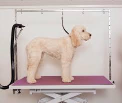 diy dog grooming table grooming table arm adjustable beblincanto tables affordable dog