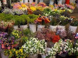 Wholesale Fresh Flowers Travis Wholesale Florist Fresh Flowers