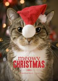 cat christmas cat christmas card sayings merry christmas happy new year
