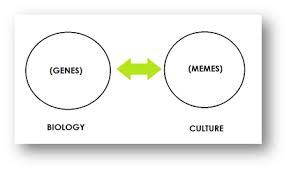 Genes And Memes - storyality 101 a science of memetic culturology storyality